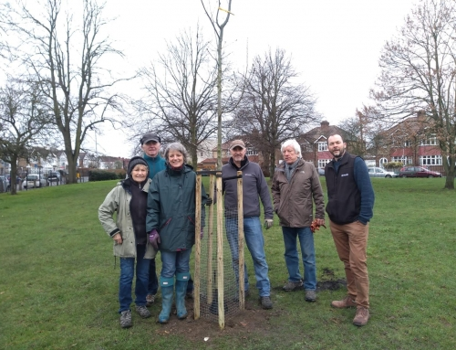 Friends of Latchmere Recreation Ground Tree Planting Update